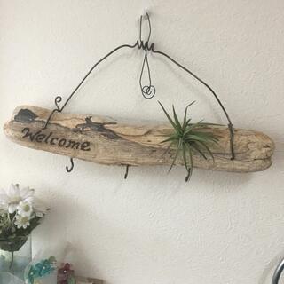 流木とエアプランツの壁掛けキーホルダー(インテリア雑貨)