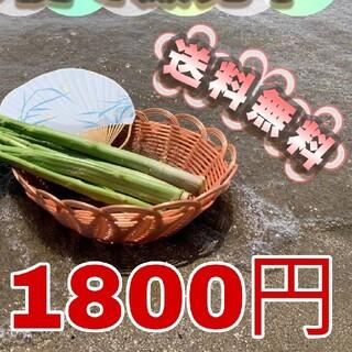 クール便 送料込み 島根県産 アスパラ 800g 夏のあっさり味(野菜)
