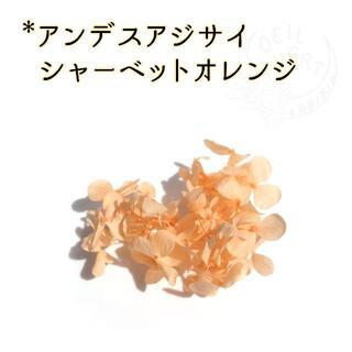 アンデスアジサイ シャーベットオレンジ 1枝(プリザーブドフラワー)