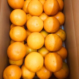 国産バレンシアオレンジ  贈答用 L 5kg 約30個 送料無料 有田みかん(フルーツ)