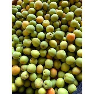 【無農薬】傷完熟豊後梅&梅3.2キロ(梅ジャム梅ジュース梅シロップ梅酒梅干し)(野菜)