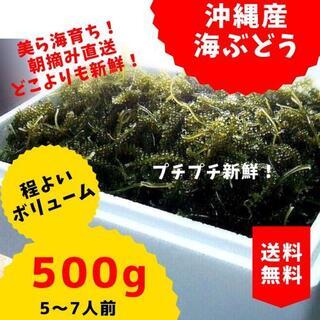 朝摘み直送!!沖縄産人気の美ら海産「国産海ぶどう」500g(野菜)