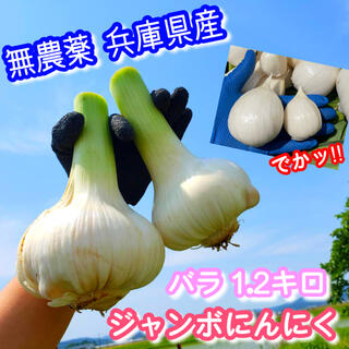 生 ジャンボにんにく 新鮮野菜 家庭菜園 兵庫県産 1.2キロ(野菜)