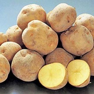 キタアカリ 黄金芋 1.5kg +メイクイーン数個 (超極小サイズ)無農薬(野菜)