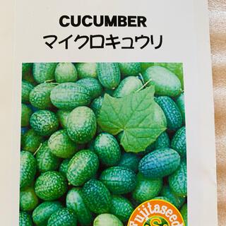 野菜種 キュウリ マイクロキュウリ 種 5粒(野菜)