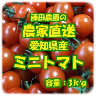 愛知県産 ミニトマト 良品 3kg(野菜)