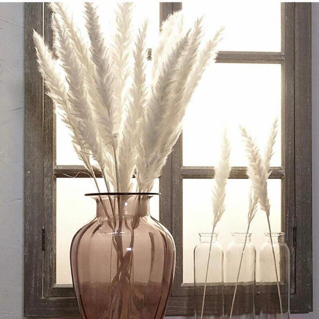 パンパスグラス 15本 ドライフラワー 韓国インテリア インスタ テールリード ハンドメイドのフラワー/ガーデン(ドライフラワー)の商品写真