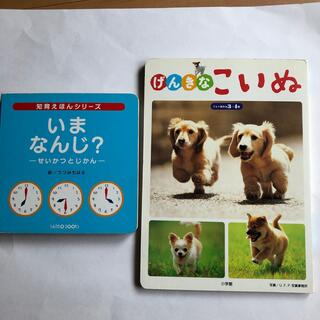 ショウガクカン(小学館)のいま なんじ?  げんきなこいぬ(絵本/児童書)
