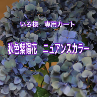 いろ様専用 ・*.秋色紫陽花2点セット.*・゚(その他)