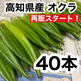 高知県産 オクラ おくら 40本 即購入OK 産地直送 新鮮