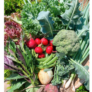 無農薬野菜の詰め合わせ