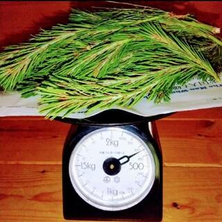 【完全無農薬】赤松 松の葉  新芽  たっぷり 350g ★増量可(野菜)