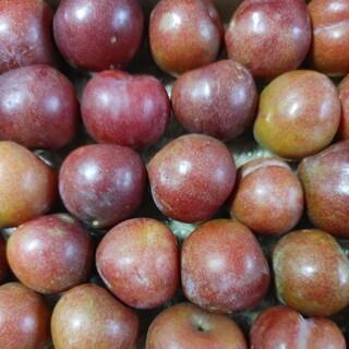産地直送 鹿児島県産 すもも 約950g(フルーツ)