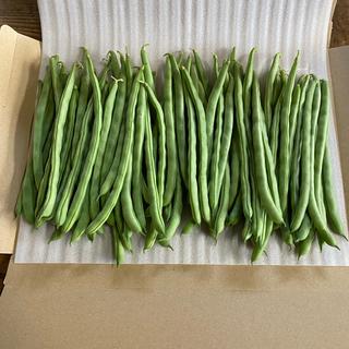 インゲン 800g     特殊栽培(野菜)