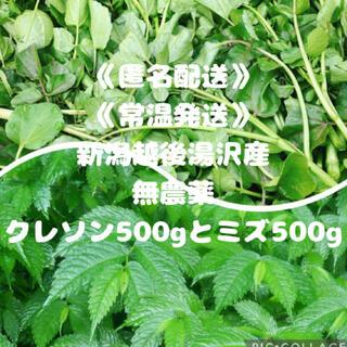 《匿名配送》《常温》《新潟産》クレソン500g ミズ 山菜 500g(野菜)