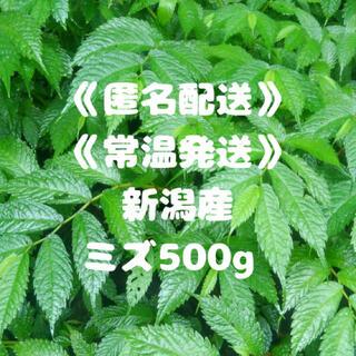 《匿名配送》《常温》《新潟産》みず ミズ 山菜 500g(野菜)