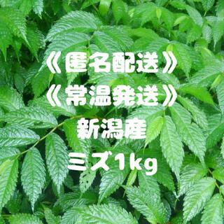 《匿名配送》《常温》《新潟産》みず ミズ 山菜 1kg(野菜)