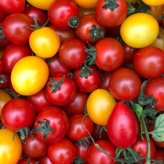 2キロ ミニトマト  7月最初で終わりです(野菜)