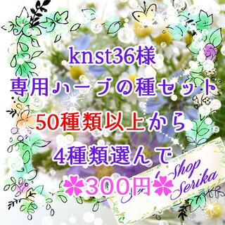 knst36様専用 ハーブの種セット 家庭菜園 野菜(その他)