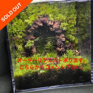 苔テラリウム トロッコトンネル ver.7(その他)