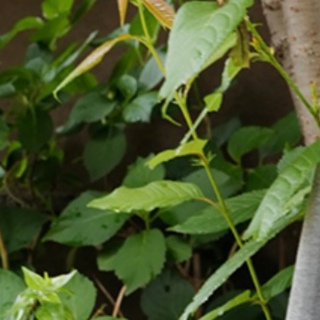 Levi's - Levi's Silver Tab Baggy Jeans 30×30