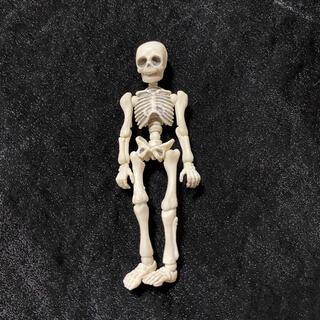 リーメント ポーズスケルトン ヒト 01 ガイコツ 骸骨 人体模型 フィギュア