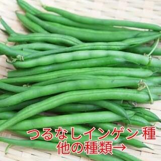 野菜種☆つるなしいんげん☆変更→アスパラ菜 ラディッシュ ちぢみほうれん草 人参(野菜)