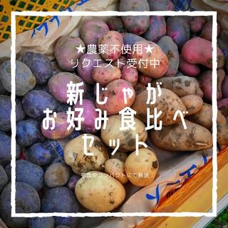 【農薬不使用】選べる新じゃが3種食べ比べセット(バラにんにくオマケ付き)(野菜)