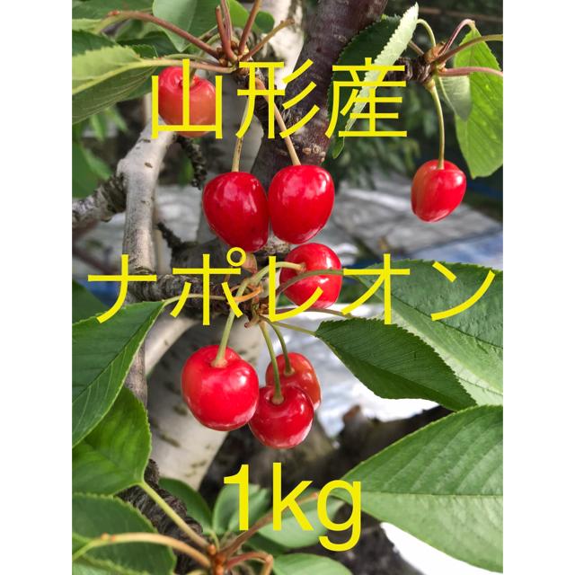 ★山形産 さくらんぼ②  ナポレオン 1kg★ 食品/飲料/酒の食品(フルーツ)の商品写真