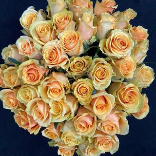 バラ 切り花・生花 バターキャラメル(淡い黄色)長さ40㎝SM混合サイズ 30本(その他)