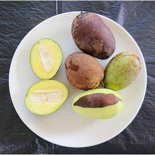 訳あり限定!沖縄産マンゴー摘果マンゴー2kg 加工用に最適です!(米/穀物)