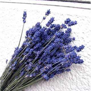 北海道ドライフラワー・ 北海道富良野濃紫ラベンダー早咲