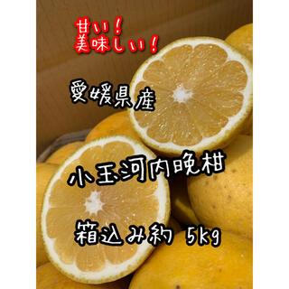 愛媛県産 小玉河内晩柑 家庭用(フルーツ)