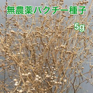 パクチー 種子 6g(野菜)