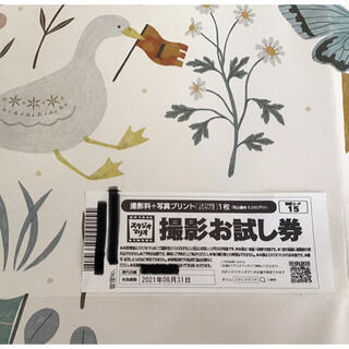 キタムラ(Kitamura)のスタジオマリオ 撮影お試し券(その他)