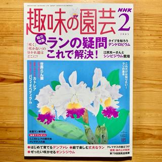 雑誌  【 NHK 趣味の園芸 2月号/2005年 】ラン特集 第383号(専門誌)