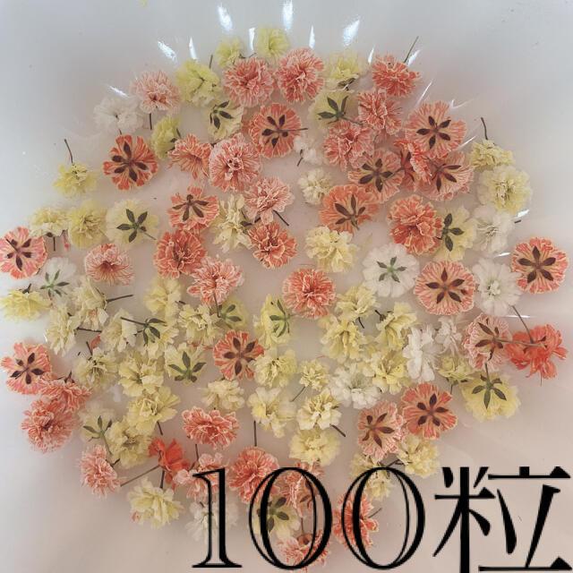 オレンジ系 かすみ草ドライフラワー100粒 ハンドメイドの素材/材料(各種パーツ)の商品写真