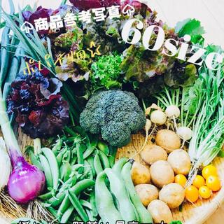 ポパイ畑☆野菜詰め合わせ*ʕ•ᴥ•ʔ*6/17(木)発送60size(野菜)