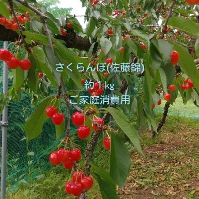 さくらんぼ(佐藤錦)訳ありご家庭消費用 約1kg 食品/飲料/酒の食品(フルーツ)の商品写真