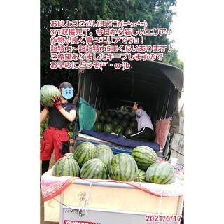 只今収穫中☆西瓜の匠厳選鳥取県産ブランド西瓜(レア!超特大サイズ1玉入り)(フルーツ)
