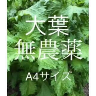 無農薬 青紫蘇 100g(野菜)