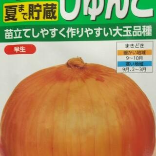 野菜の種       玉ねぎ   早生アイドルじゅんこ(野菜)