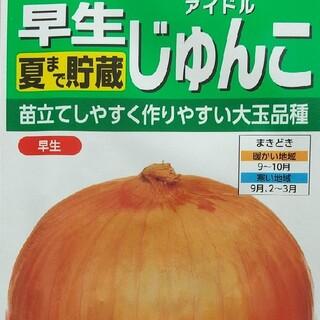 野菜の種      早生アイドルじゅんこ(野菜)