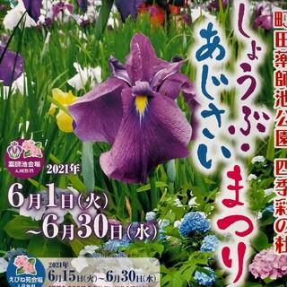 町田薬師池公園  しょうぶ あじさい まつり  チラシ(印刷物)