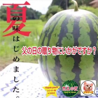 希少!早い者勝ち☆西瓜の匠厳選鳥取県産ブランド西瓜(超特大サイズ1玉入り)(フルーツ)