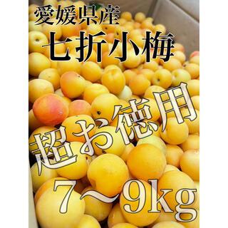 愛媛県産 超お徳用訳あり【七折小梅】梅のみ約7〜9kg!(フルーツ)