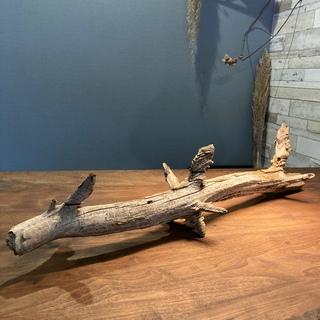 真っ直ぐで波波な枝…流木、オブジェ、水槽、インテリア(彫刻/オブジェ)