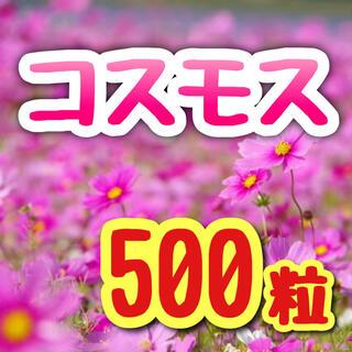 【蒔きどき到来!】コスモス☆カラフルミックス 種 500粒以上!(プランター)