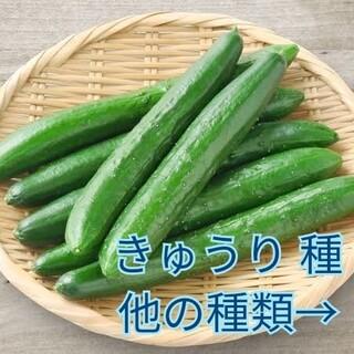 野菜種☆きゅうり☆変更→ミニトマト オカヒジキ 春菊 茎ブロッコリー 葉ねぎ(野菜)