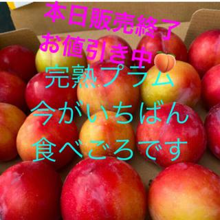 今が旬❣️限定5箱19日発送 ❤︎ 自然農法 完熟プラム ヤマトコンパクト配送(フルーツ)